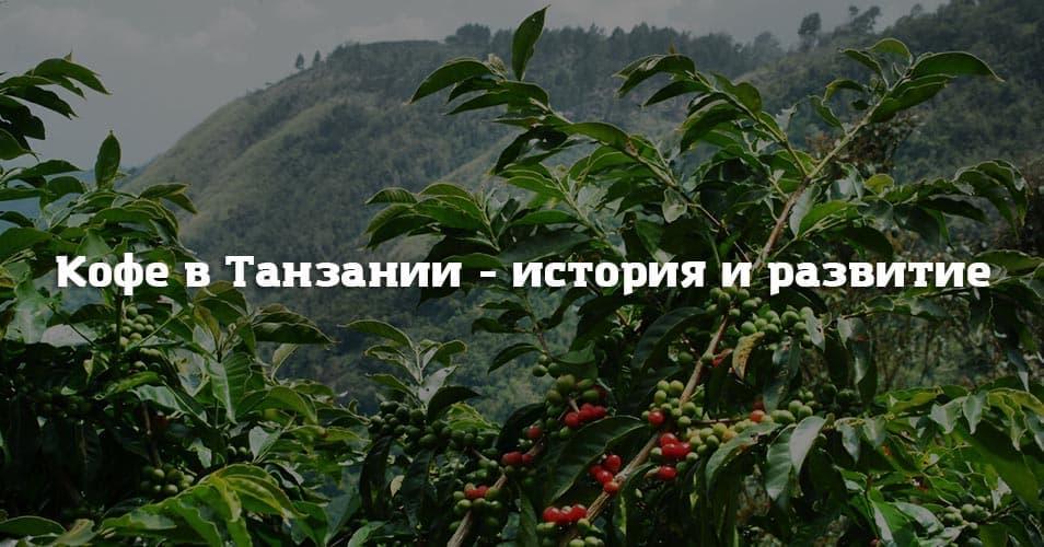 Кофе в Танзании - история и развитие